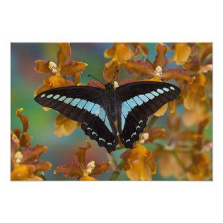 Sammamish、ワシントン州。 熱帯蝶56 フォトプリント