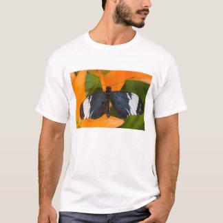 Sammamish、ワシントン州。 熱帯蝶59 tシャツ