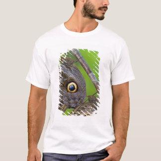 Sammamish、ワシントン州。 熱帯蝶5 tシャツ
