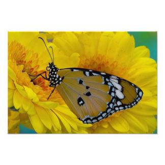 Sammamish、ワシントン州。 熱帯蝶63 フォトプリント