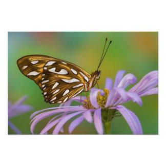 Sammamish、ワシントン州。 熱帯蝶67 フォトプリント