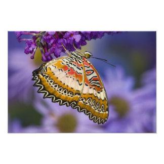 Sammamish、ワシントン州。 熱帯蝶7 フォトプリント