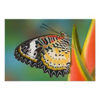 Sammamish、ワシントン州。 熱帯蝶9 フォトプリント