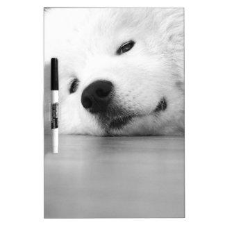 Samoyedの写真犬の白 ホワイトボード