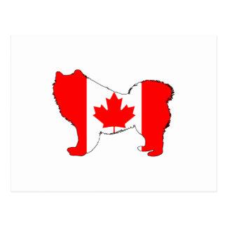 Samoyedカナダ ポストカード