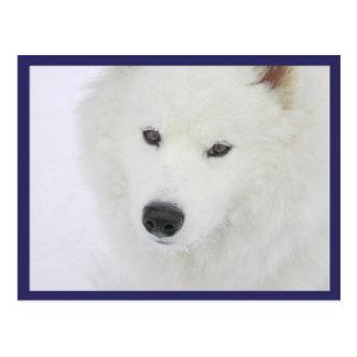Samoyed - PVSC -雪 ポストカード