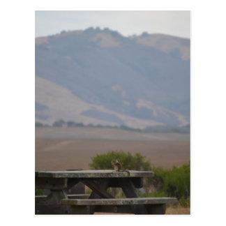 San Simeonの国立公園、カリフォルニアのピクニック用のテーブル ポストカード