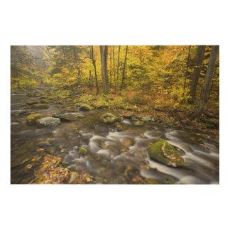 Sandersonの小川。  チェスターBlanfordの州の森林 ウッドウォールアート