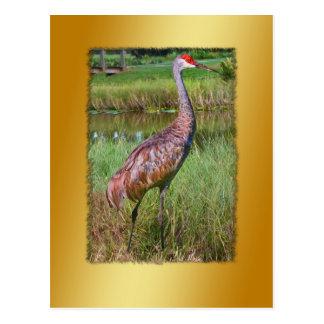 Sandhillクレーン鳥の郵便はがき ポストカード