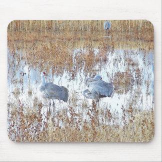 Sandhillクレーン鳥の野性生物動物の写真撮影 マウスパッド
