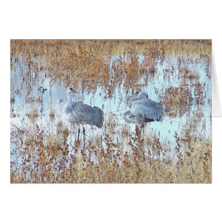 Sandhillクレーン鳥の野性生物動物 カード