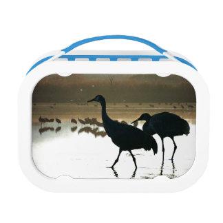 Sandhillクレーン鳥の野性生物動物 ランチボックス