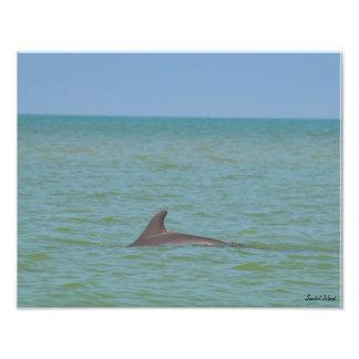 Sanibelのイルカの写真のプリント フォトプリント