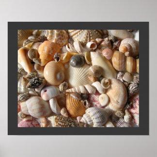 Sanibelの貝殻のコレクション ポスター