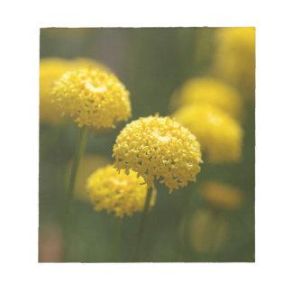 Santolinaのrosmarinifoliaの花 ノートパッド