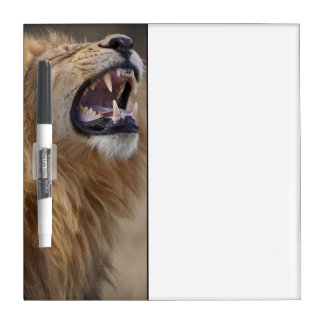 Savutiの成長したオスのライオン(ヒョウ属レオ) ホワイトボード