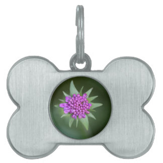 Scabiosaのlucidaの花 ペットネームタグ