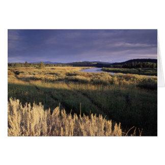 Scenics -写真-アメリカヘラジカの道 カード
