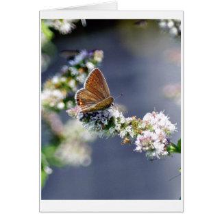 Schmetterling カード