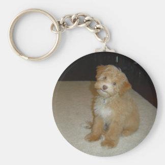 Schnoodleの愛らしい子犬 キーホルダー