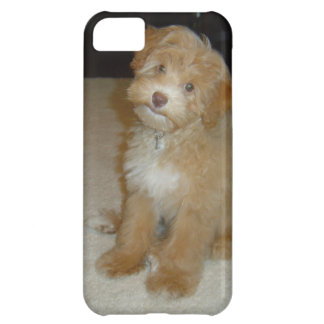 Schnoodleの愛らしい子犬 iPhone5Cケース