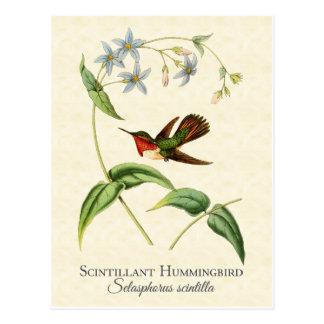 Scintillantハチドリのヴィンテージの芸術 ポストカード