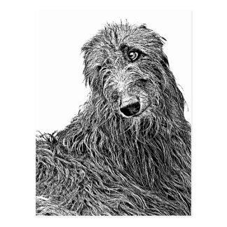 Scottish deerhound Noir et Blanc ポストカード