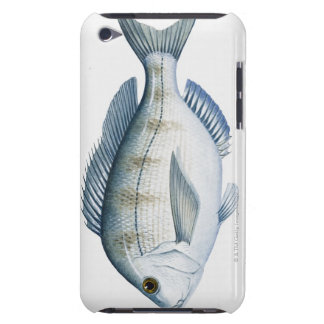 Scupの魚 Case-Mate iPod Touch ケース