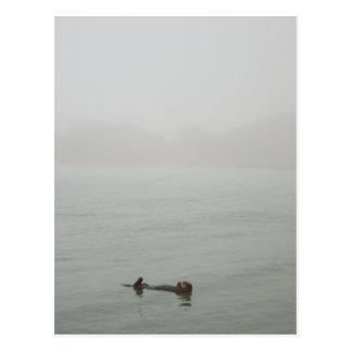 Sea Otter in the fog ポストカード