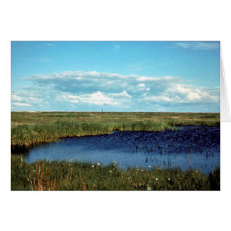 Sedgeの沼地 カード