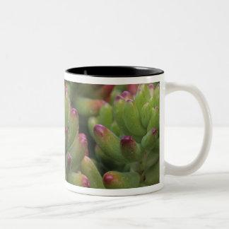 Sedumの植物、アリゾナソノラの砂漠博物館、 ツートーンマグカップ