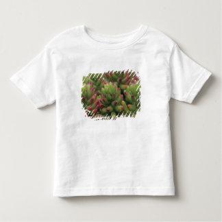 Sedumの植物、アリゾナソノラの砂漠博物館、 トドラーTシャツ