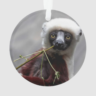 SefakaのLemurの野性生物動物の写真 オーナメント