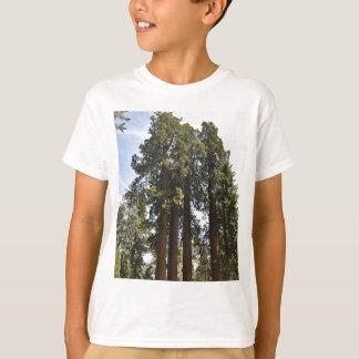 Sequioaの国立公園 Tシャツ