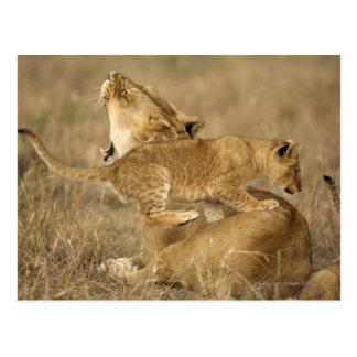 Serengetiの国立公園、タンザニア ポストカード