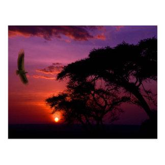 Serengeti、アフリカの日没 ポストカード