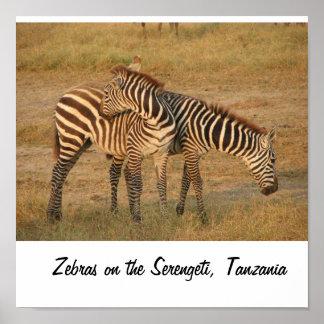 Serengeti、タンザニアのシマウマ ポスター