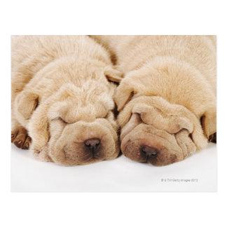 Shar 2匹のPeiの子犬の睡眠 ポストカード