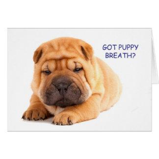 Shar Peiの子犬のバースデー・カード カード
