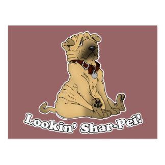 Shar-Peiを見ること ポストカード