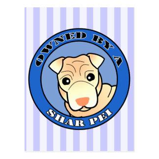 Shar Pei -クリーム色のコート著所有される-青 ポストカード