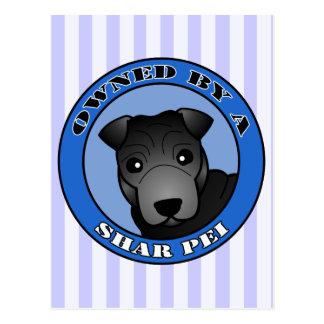 Shar Pei -黒いコート著所有される-青 ポストカード