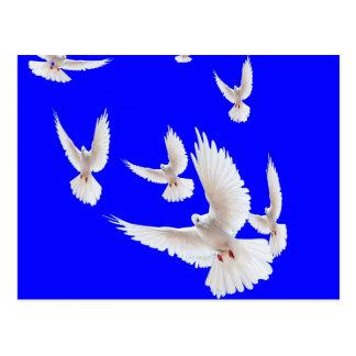 Sharles著白い鳩のコバルトブルーのギフト ポストカード