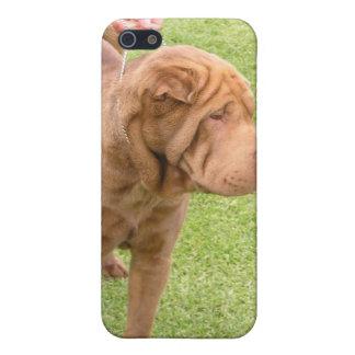 Sharpeiショー犬 iPhone 5 Case