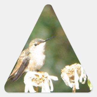 Shastaデイジーで休むハチドリの写真 三角形シール