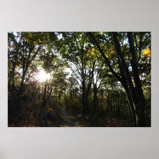 Shenandoahの国立公園の秋の朝 ポスター