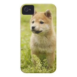 Shibaケンの子犬 Case-Mate iPhone 4 ケース