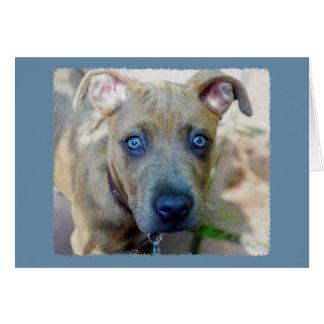 Shirleyテイラー著ピット・ブルのBrindle子犬 カード