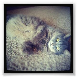 Shirleyテイラー著灰色の長い髪猫Instagram フォトプリント