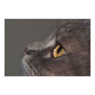 Shirleyテイラー著猫の目マクロ フォトプリント